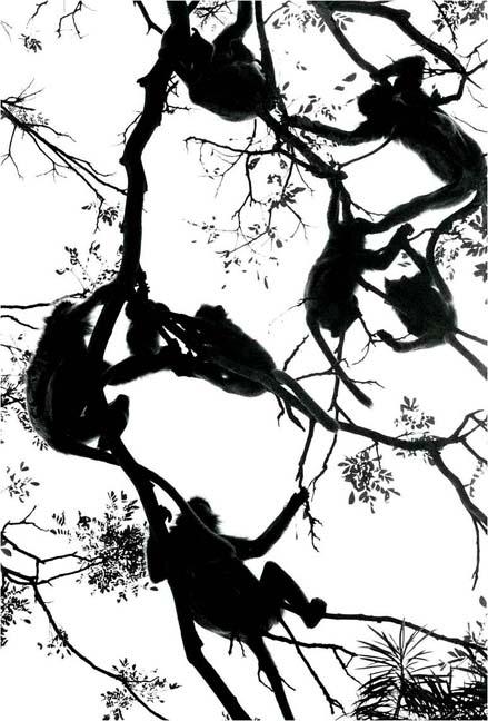 monkeysintree